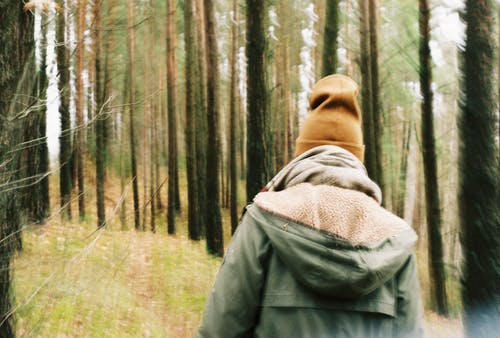 Free stock photo of 35mm, forest, fujifilm, old camera