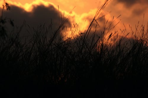 Foto d'estoc gratuïta de amor, atmosfèric, blat, blavet