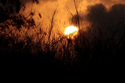Foto d'estoc gratuïta de alba, arbres, atmosfèric, brillant