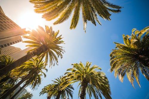 Ingyenes stockfotó ég, épületek, fák, kék ég témában
