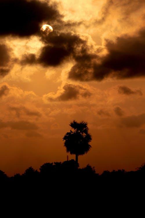Foto d'estoc gratuïta de alba, capvespre, cel, color