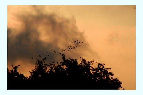 Foto d'estoc gratuïta de alba, amb boira, animals, arbre
