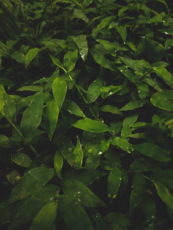 Adobe Photoshop, çimenlik, doğa