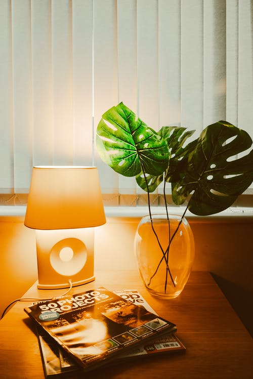 Photo of Plants Near Lampshade