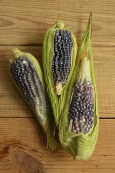 Free stock photo of food, wood, leaf, corn