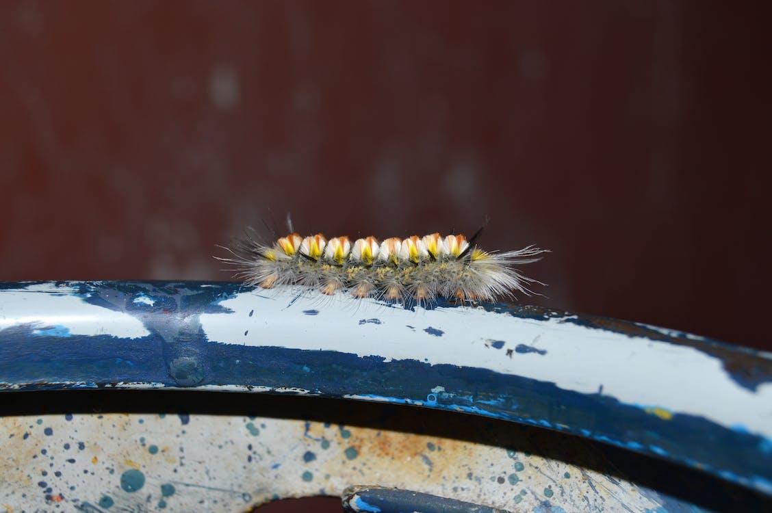宏觀, 幼蟲, 昆蟲