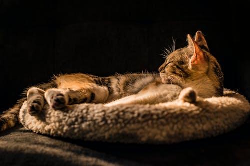 Δωρεάν στοκ φωτογραφιών με αιλουροειδές, άραγμα, Γάτα, γατάκι