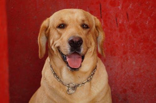 Foto profissional grátis de animal, animal de estimação, cachorro