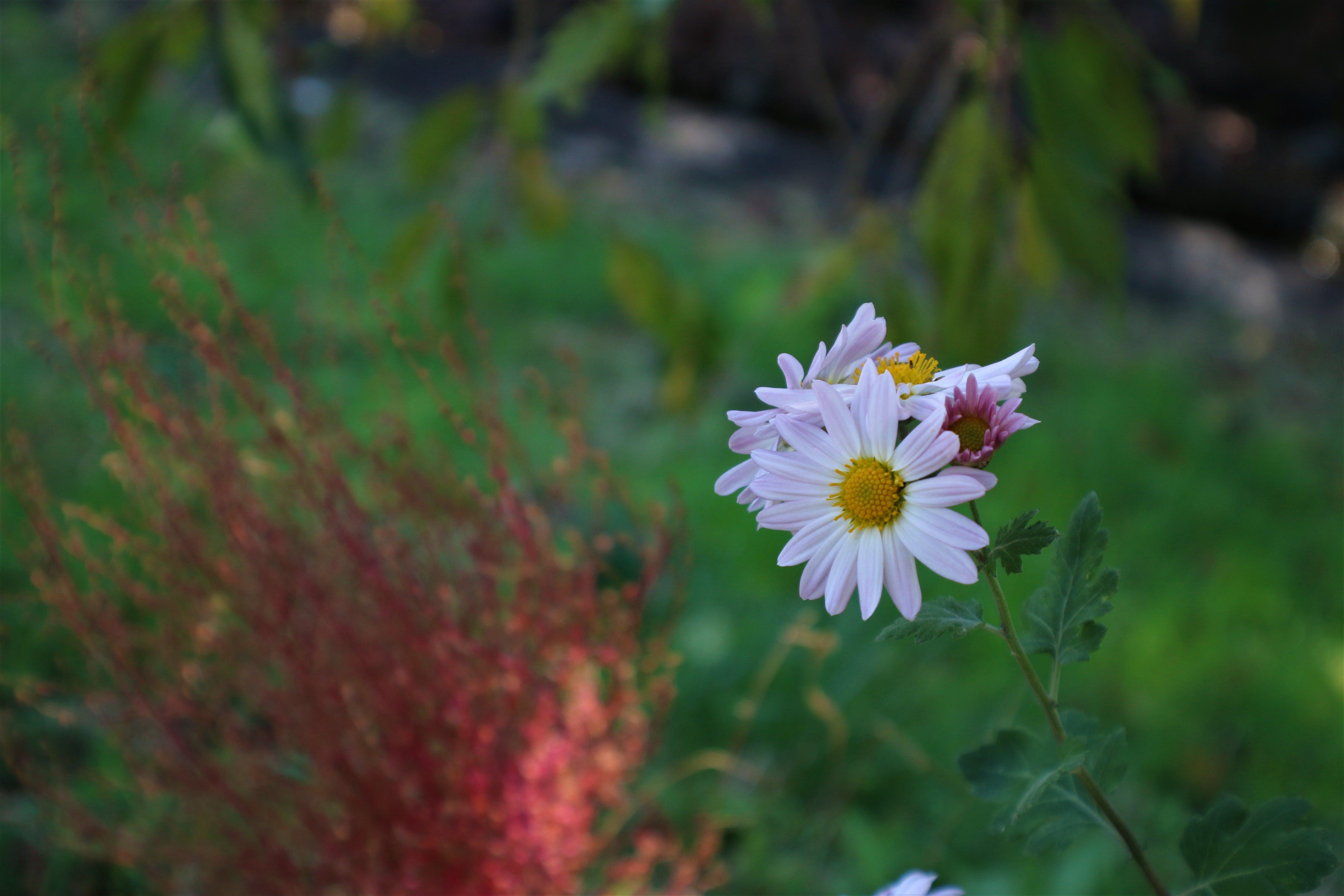 Free stock photo of beautiful flower, white flower