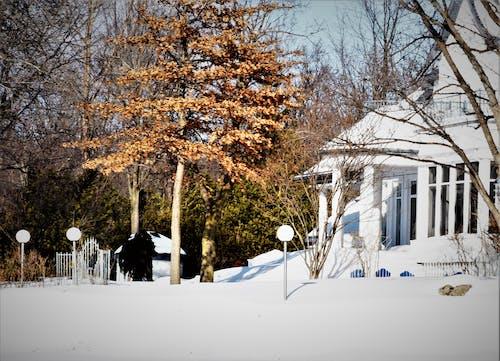 Imagine de stoc gratuită din arbore, iarnă