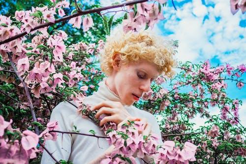 Gratis lagerfoto af blomster, blond, blondine, bougainvillea