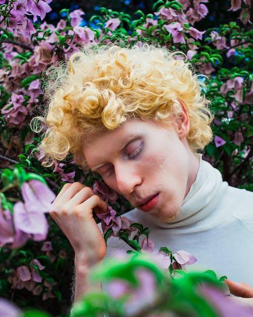 Darmowe zdjęcie z galerii z blond, bugenwilla, flora, kwiaty