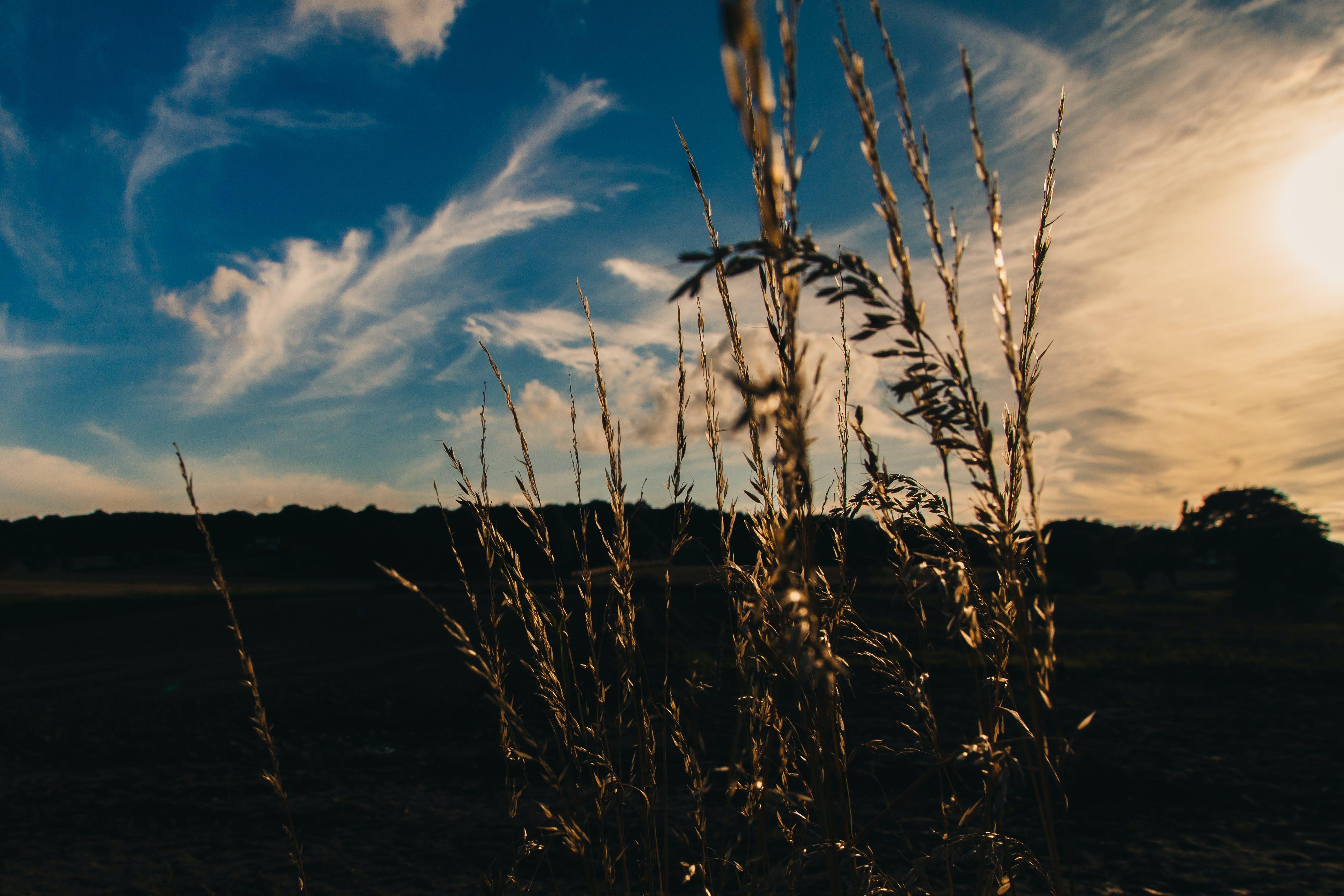 Foto stok gratis bidang, malam, matahari, padang rumput