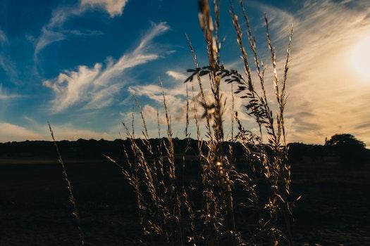 Free stock photo of field, sun, meadow, evening
