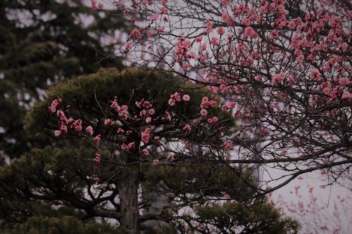 Foto d'estoc gratuïta de flor bonica