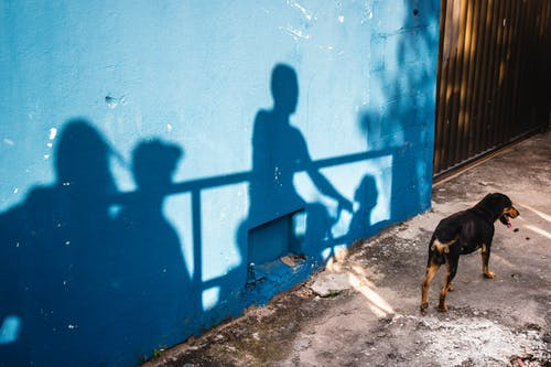 Curious dog standing near shabby blue wall with shadows of group of people on street in city in bright daylight