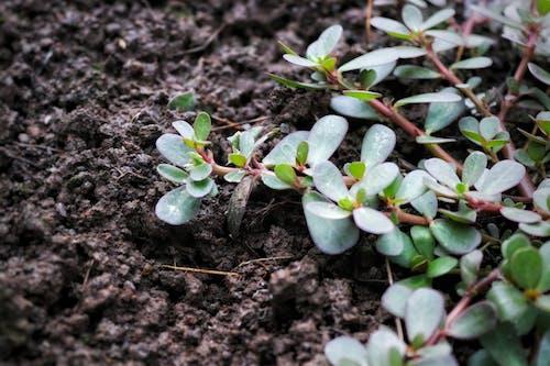 Ingyenes stockfotó fa, friss zöldség, új üzem, zöld témában