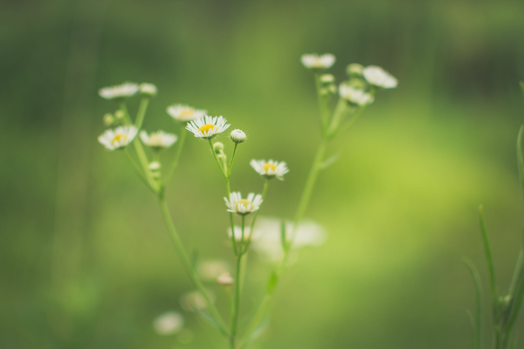 Free stock photo of nature, spring, flower, green