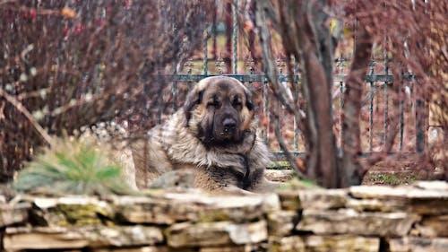 Foto d'estoc gratuïta de animal, arbust, bonic, bufó