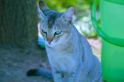 คลังภาพถ่ายฟรี ของ การถ่ายภาพสัตว์, การถ่ายภาพสัตว์ป่า, ภาพสัตว์ป่า, สัตว์