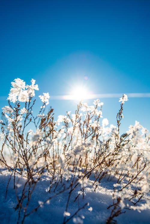 Gratis stockfoto met bevroren, bloemen, extreem, hemel