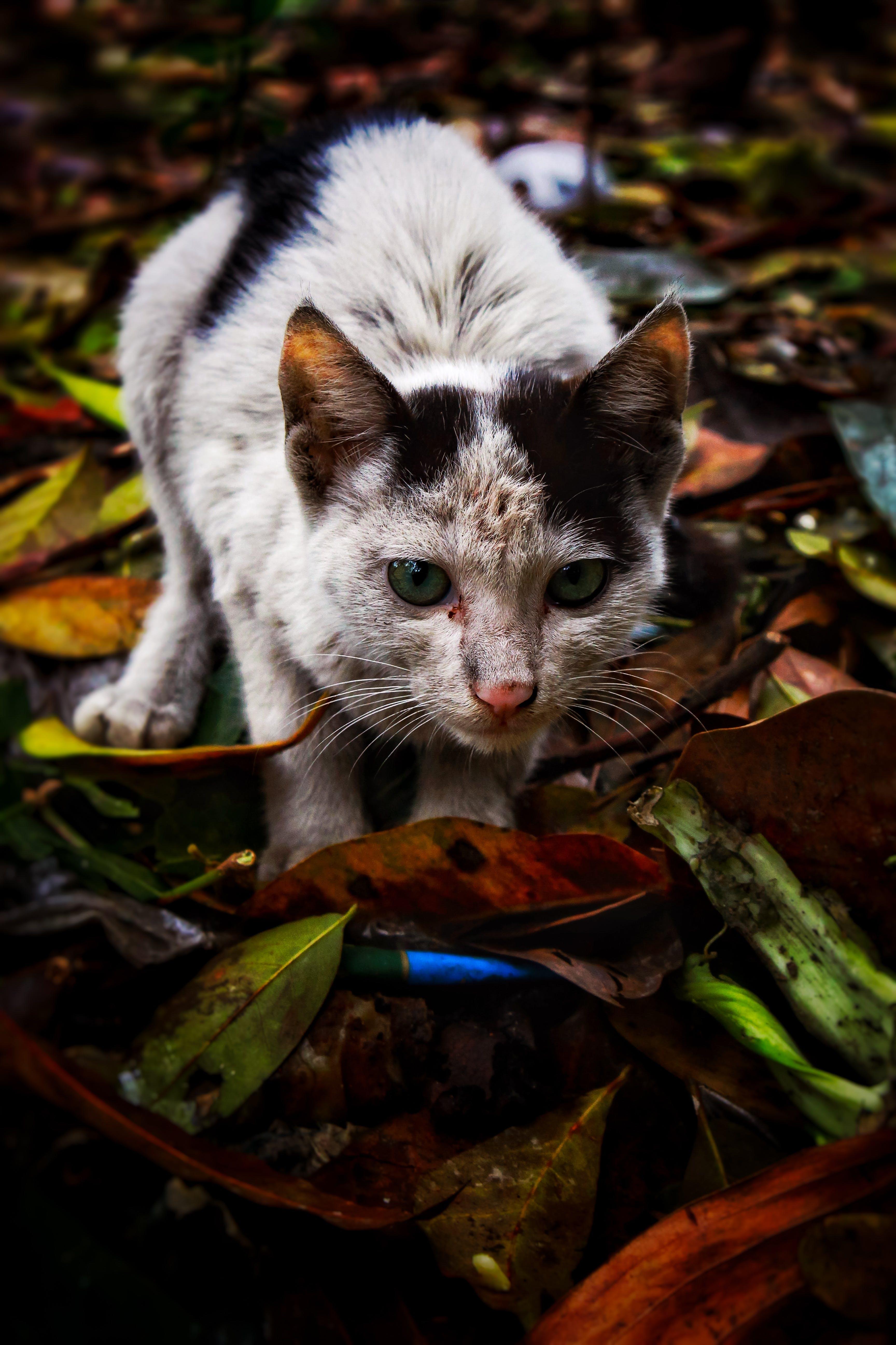 Foto profissional grátis de agressão, agressivo, amante dos animais, cara de gato