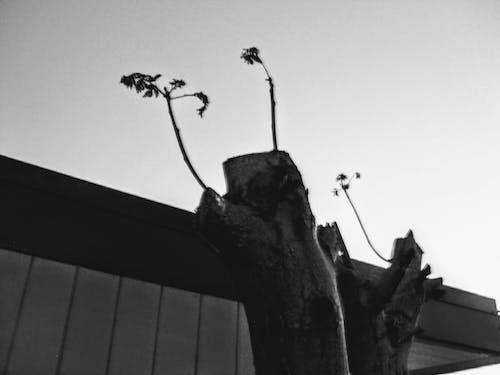 คลังภาพถ่ายฟรี ของ การอยู่รอด, กิ่งไม้, ขาวดำ, ความทนทาน
