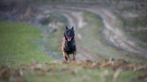 Foto d'estoc gratuïta de animal, canya de treball, corredors, gos