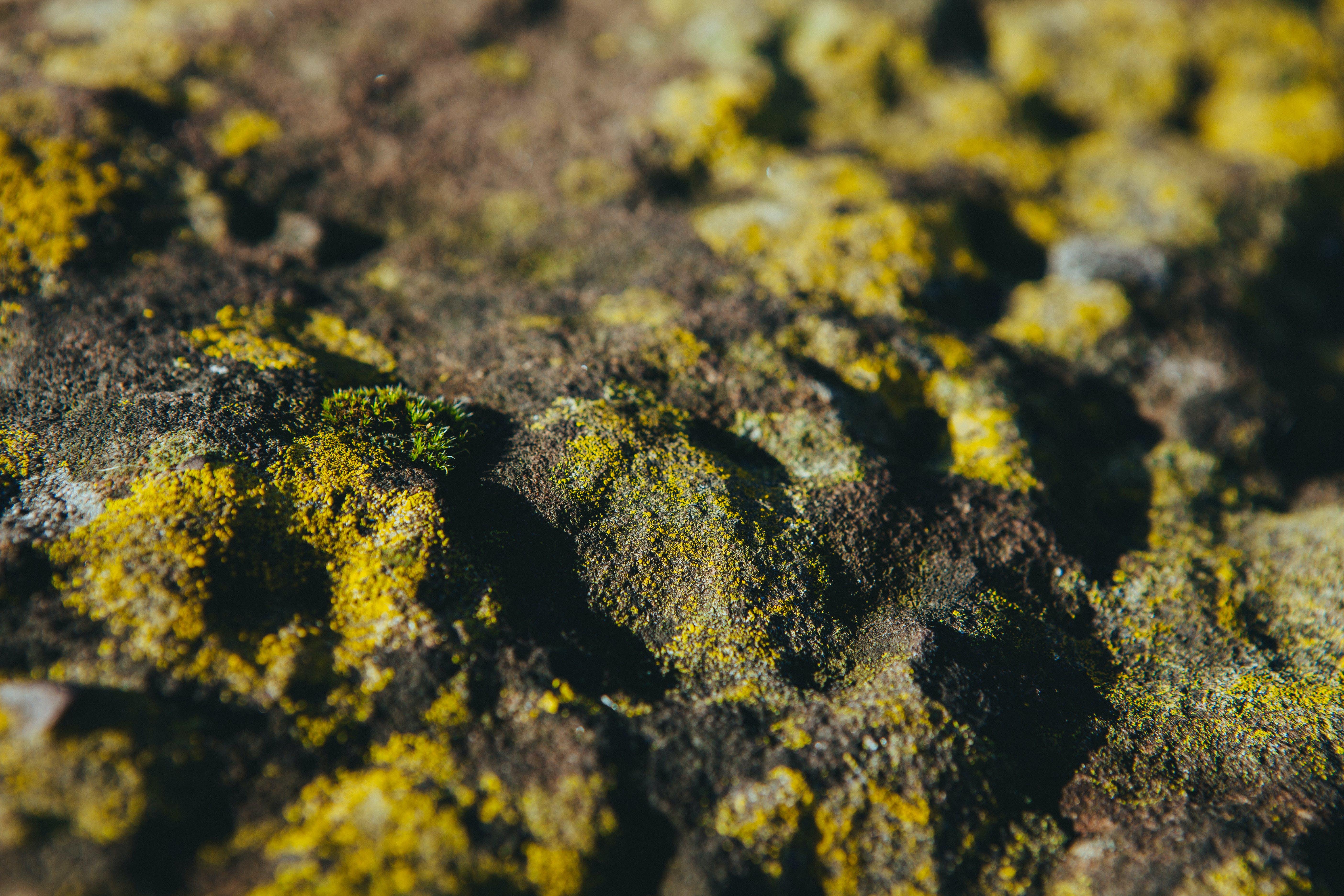 Free stock photo of slippery, moss, stones, slippy