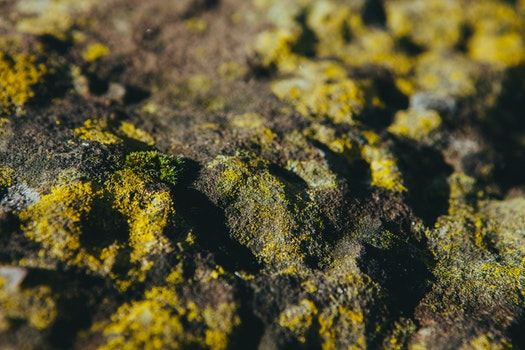Free stock photo of slippery, moss, stones, slippy