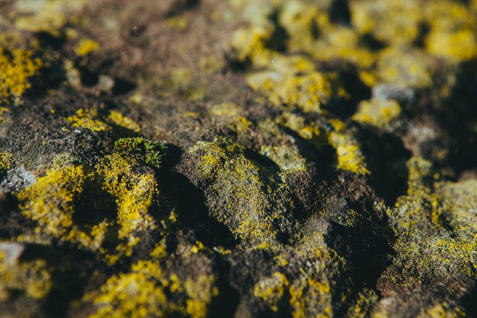 moss, slippery, slippy