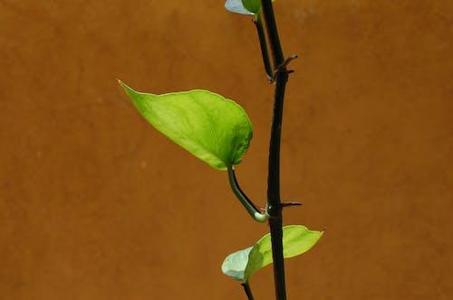 Free stock photo of beautiful, green leaf, nature
