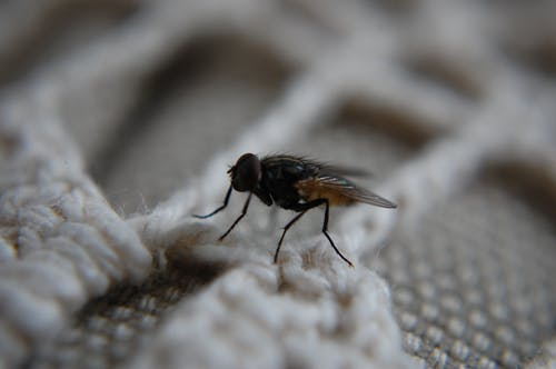 Free stock photo of insect, macro