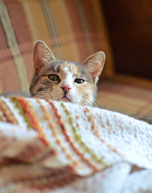 Free stock photo of blanket, cat, colourful