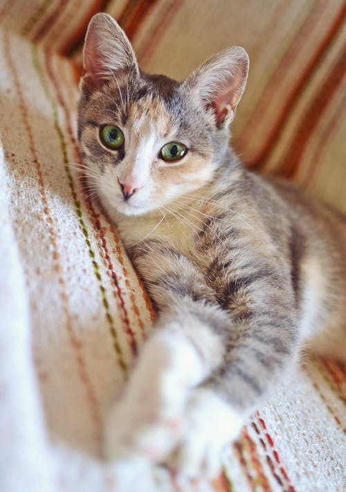 Free stock photo of cat, colourful, couch