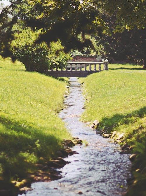 Free stock photo of bridge, green, melancholy