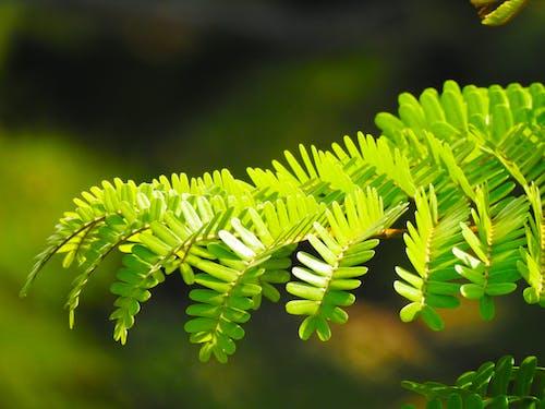 新緑, 新鮮な, 枝, 緑の無料の写真素材