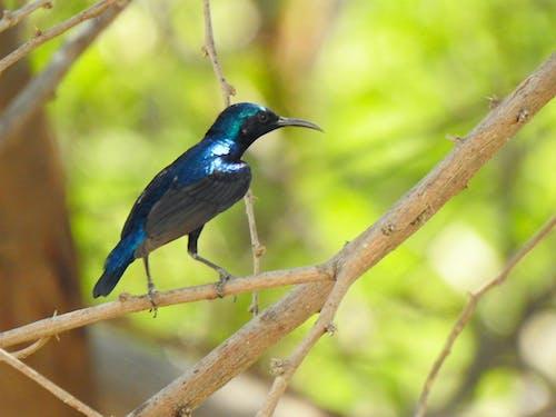 ハミングバード, メタリック, 光沢のある, 小さい鳥の無料の写真素材