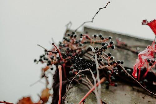 Kostenloses Stock Foto zu natur, spinnennetz