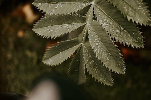 Foto profissional grátis de ecológico, gotas de chuva, molhado, pingo d'água