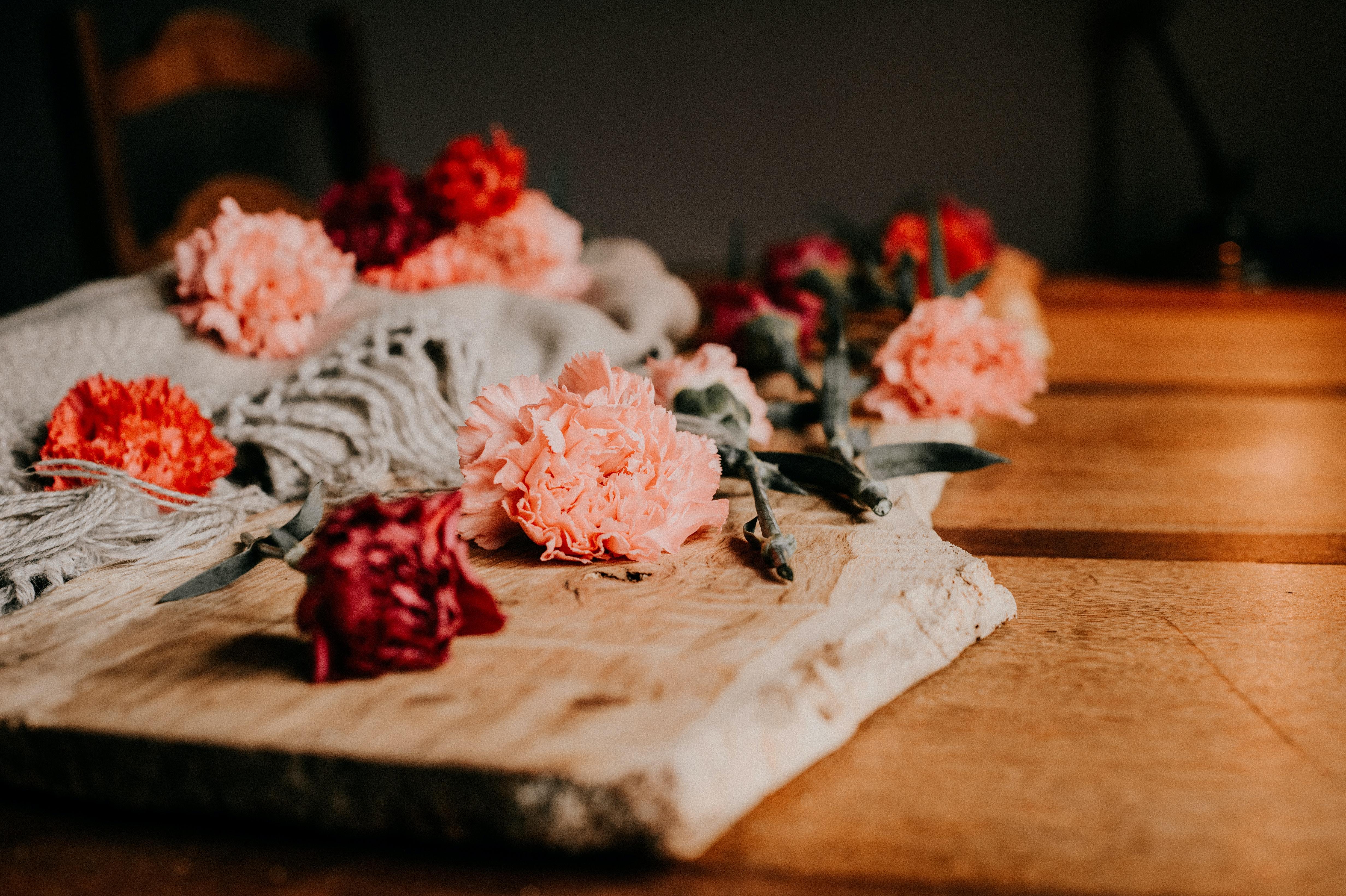 Free stock photo of flower art, flower composition, flowers