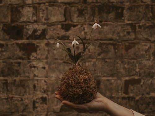Gratis lagerfoto af årgang, artsy, blade, blomster