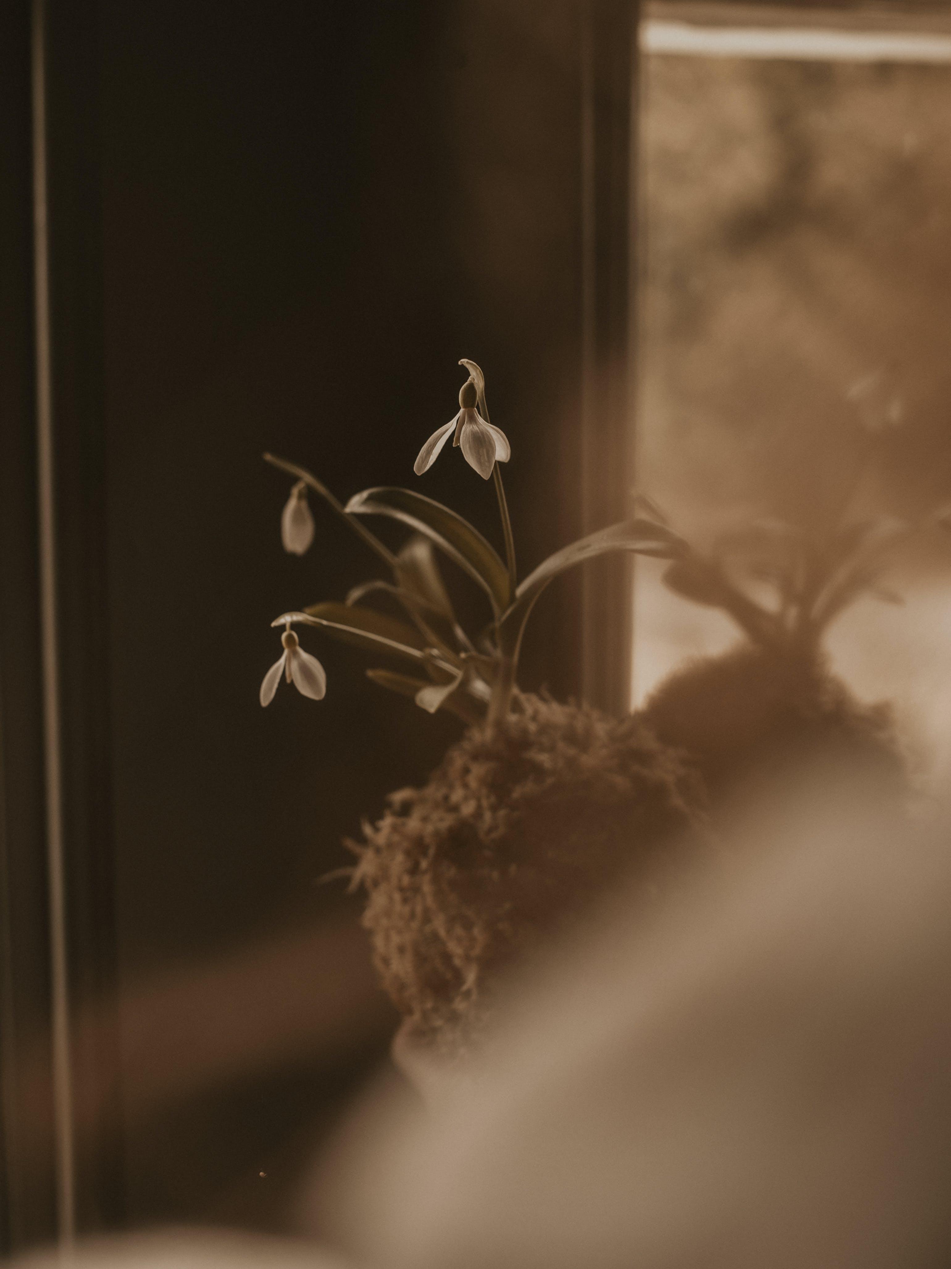 Gratis lagerfoto af blade, blomster, blomstrende, close-up