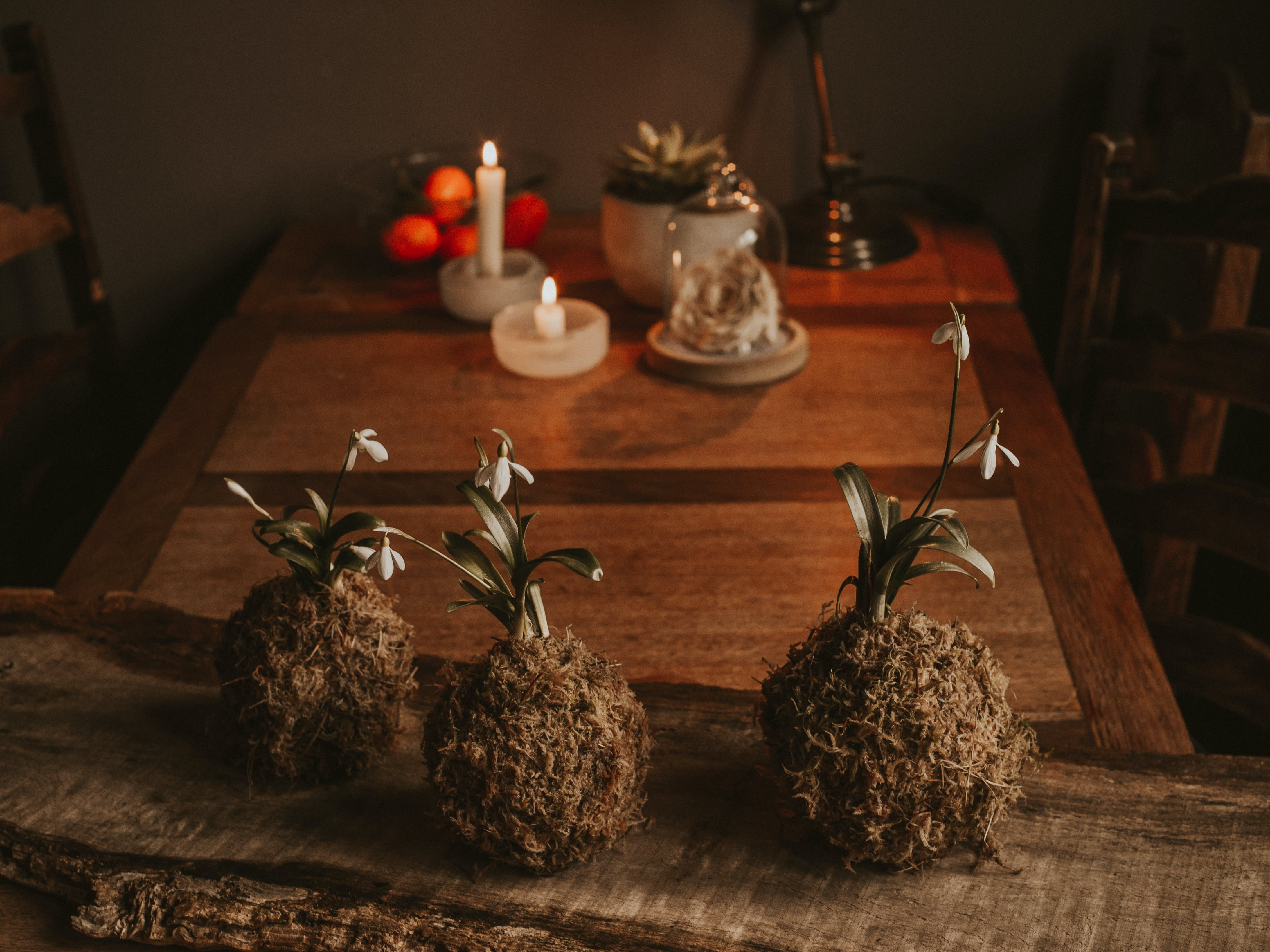 Three Brown Flower Plant on Table