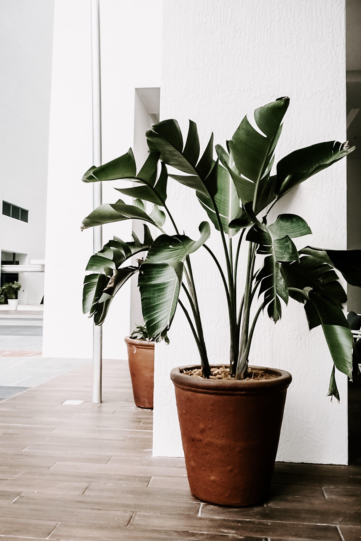 Darmowe zdjęcie z galerii z ciemnozielone rośliny, dekoracja, dojrzewanie, doniczka