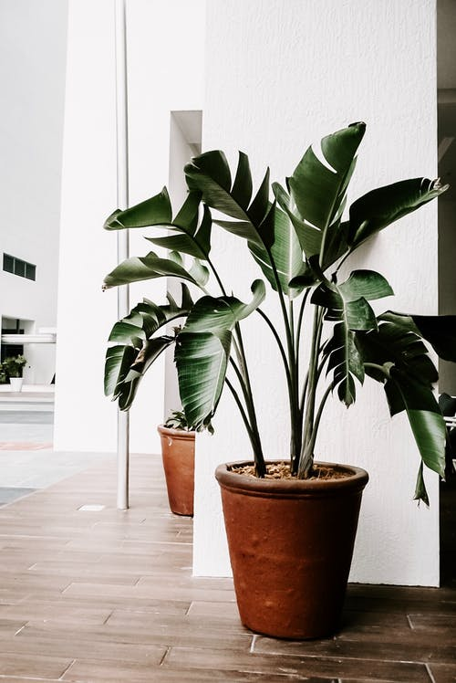Green Indoor Plants