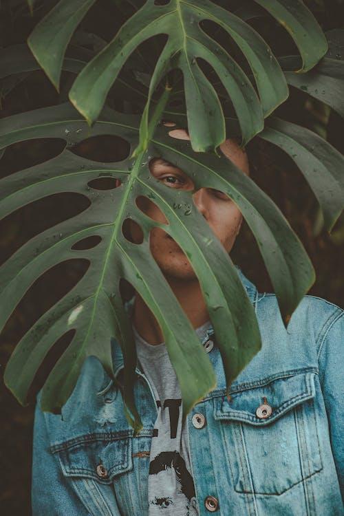 Kostenloses Stock Foto zu baum, bedeckt, farbe, flora