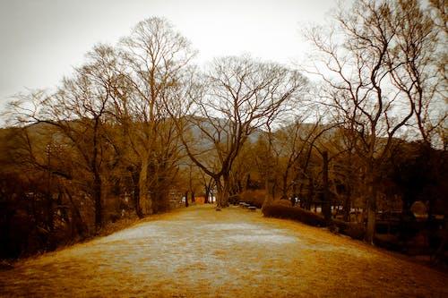 Foto d'estoc gratuïta de arbre, bellesa natural