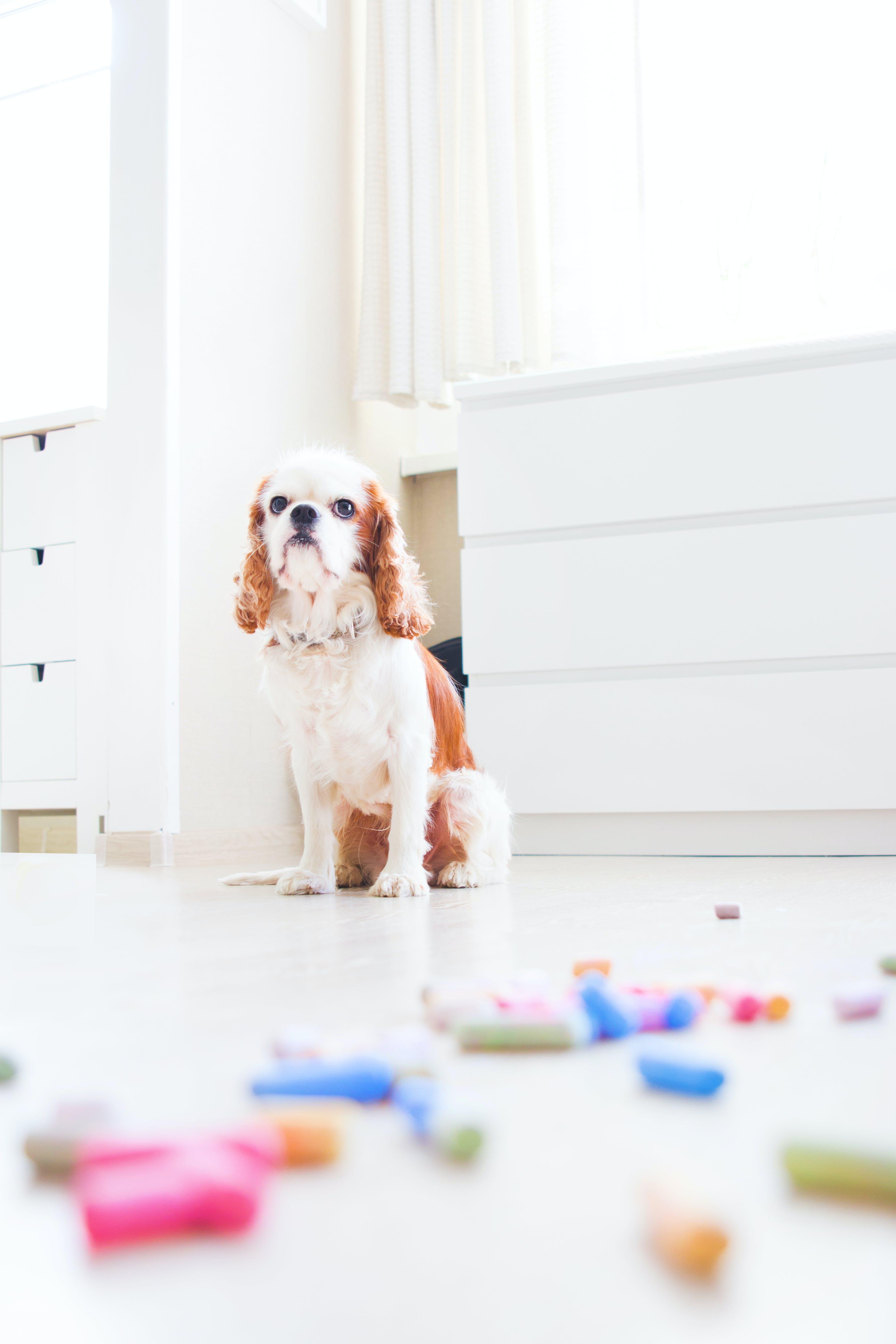 Pet Dog Sitting Down on Floor