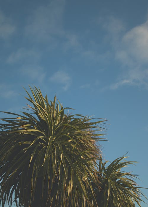 Безкоштовне стокове фото на тему «відділення, Денне світло, дерево, зелений»